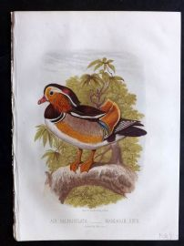 Jones & Cassell 1869 Antique Bird Print. Mandarin Duck